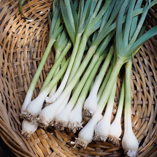 What's in Season in Spring? Green Garlic.